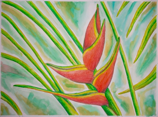 Level IV-Lesson 4: The Hawaiian Heliconia (Online Art Lessons for Kids | ArtAchieve)